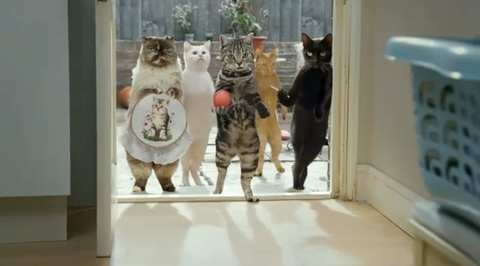 """Cravendale """"Cats With Thumbs"""" Advert 1"""