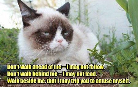 Grumpy Cat Meme 06