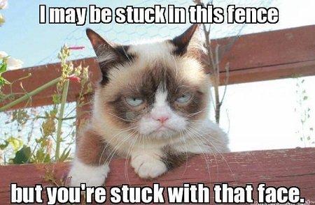 Grumpy-Cat-Meme-10 10 New Grumpy Cat Memes  Grumpy-Cat-Meme-09 10 New Grumpy Cat Memes  Grumpy-Cat-Meme-08 10 New Grumpy Cat Memes  Grumpy-Cat-Meme-07 10 New Grumpy Cat Memes