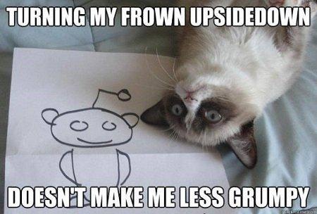 Grumpy Cat Meme 08