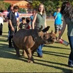 Asha the Rhino 02 150x150 10 Facts: Johannesburg