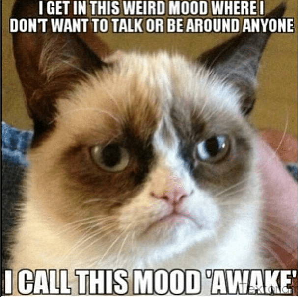 13 new grumpy cat memes. Black Bedroom Furniture Sets. Home Design Ideas