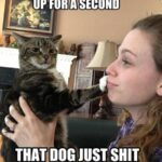 Pet Meme 05 150x150 Best Vines of July 2013 (Video)