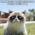Grumpy Cat 05 150x150 Some Iron Man Memes