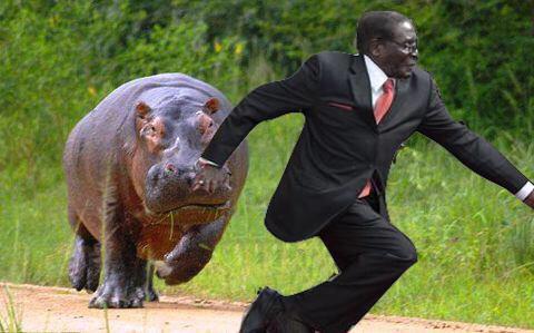 15 Hilarious #MugabeFalls Memes 11