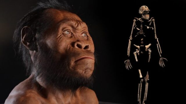 Homo Naledi 'What They Found In Maropeng'