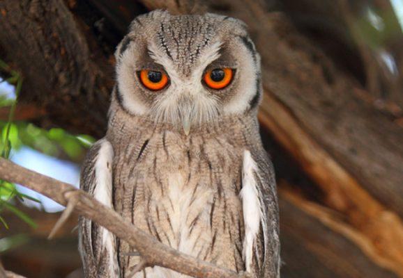 Owl Rescue Centre puts plastic to good use 3