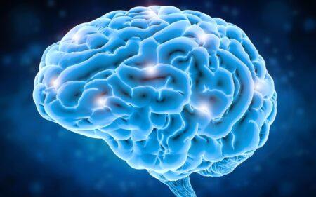 Brain - Facts
