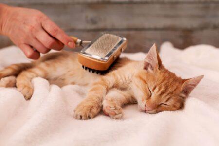Cat Fur Health