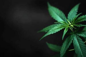 The Cannabis Industry And Technology: All You Need To Know